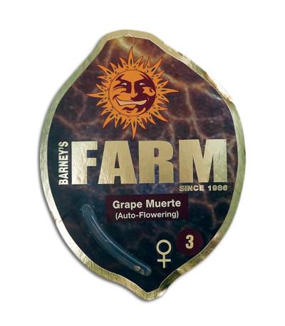 Семена сорта Grape Muerte Auto fem